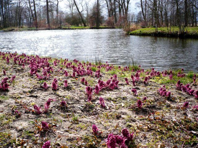 Zdjęcia: Arkadia, Mazowsze, mgnienia wiosny..., POLSKA