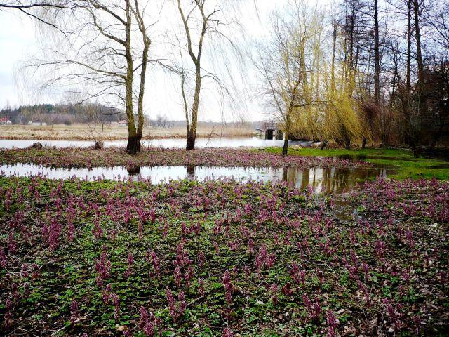 Zdjęcia: Arkadia, Mazowsze, mgnienia wiosny...1, POLSKA