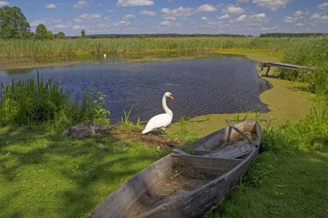 Zdjęcia: , , Narwiański Park Narodowy/Adobe Stock, POLSKA