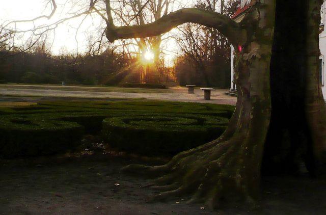 Zdj�cia: Nieborow, Mazowsze, drzewo..., POLSKA