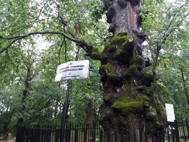 Zdjęcia: Szczebrzeszyn, Roztocze, Drzewo pamięta..., POLSKA