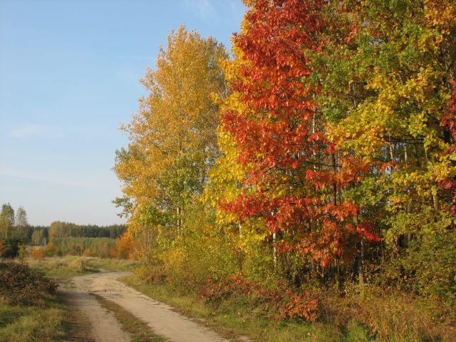 Zdjęcia: Gdzies tam u mnie..., Zapach jesieni, POLSKA