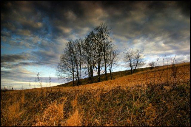 Zdjęcia: pole :-), woj.Opolskie, wiosenne impresje 8, POLSKA