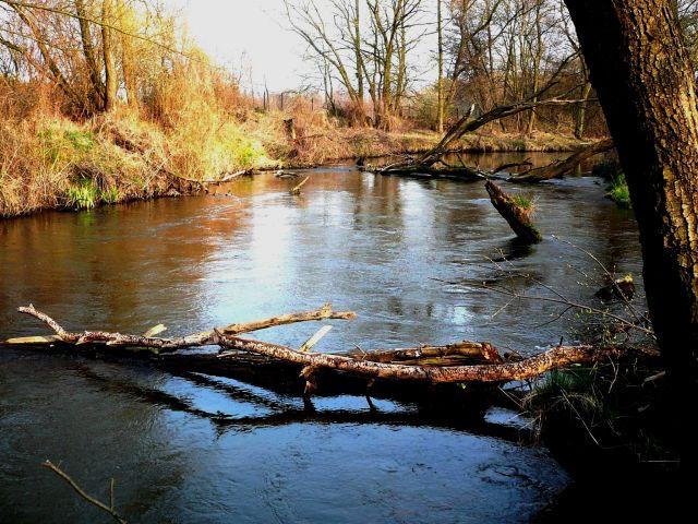 Zdjęcia: ok.Skierniewic, Mazowsze, rzeka 4, POLSKA