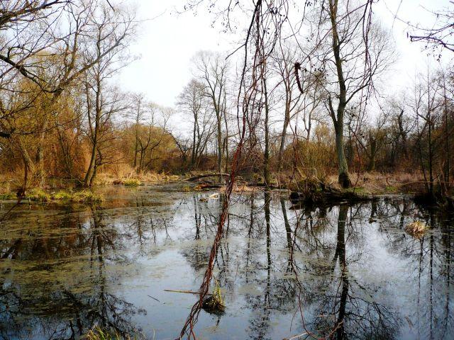 Zdjęcia: ok.Skierniewic, Mazowsze, rzeka 6, POLSKA