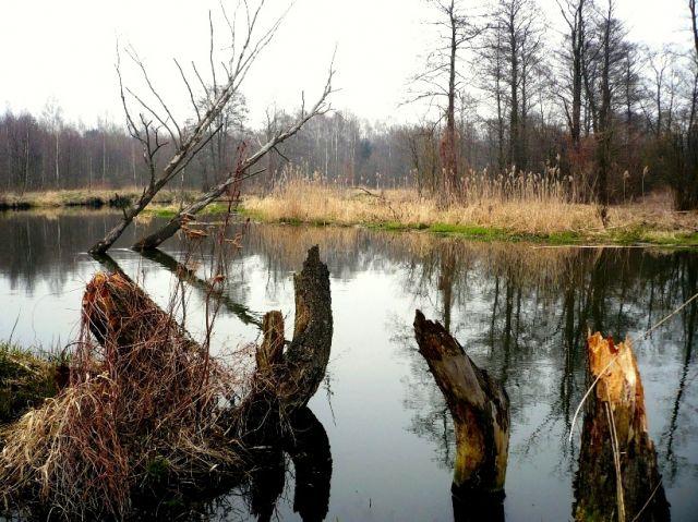 Zdjęcia: gdzies..., Mazowsze, nad rzeka, POLSKA