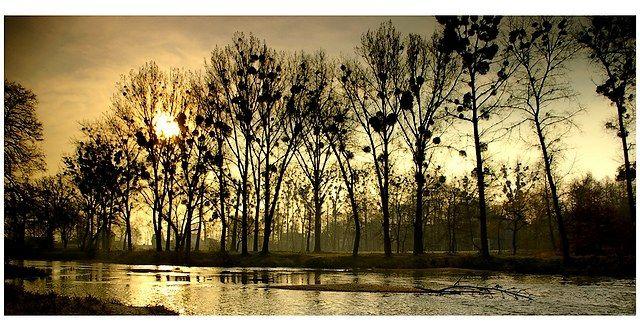 Zdjęcia: rzeka, woj.Opolskie, ranną porą, POLSKA