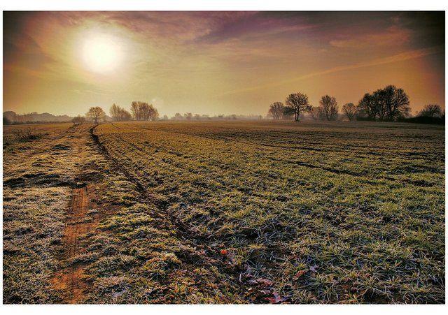 Zdjęcia: pole, woj.Opolskie, ranną porą, POLSKA