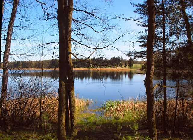 Zdjęcia: Moje okolice, Centralna Polska, Leśne jeziorko, POLSKA