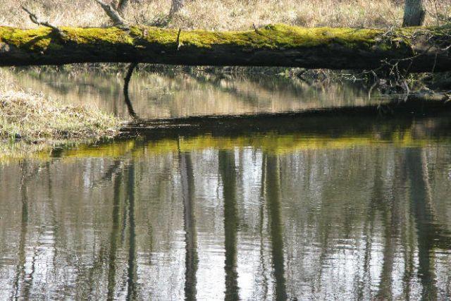 Zdjęcia: dolina Warty, Wielkopolska, wiosna1, POLSKA