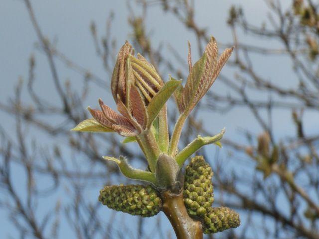 Zdjęcia: tam gdzie już przyszła wiosna, idzie wiosna, POLSKA