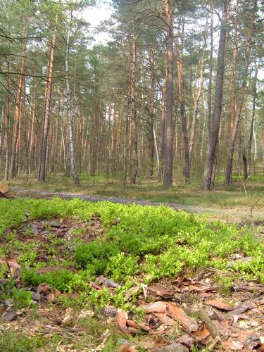 Zdj�cia: 30 km od centrum stolicy, mazowsze, kilka chwil s�onka w wielk� maj�wk�, POLSKA