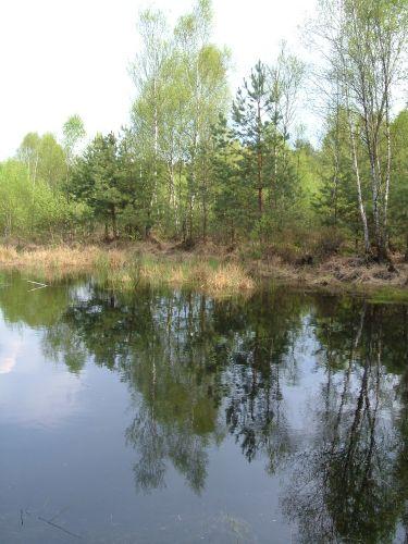 Zdjęcia: 30 km od centrum stolicy, mazowsze, coraz więcej zieleni, POLSKA