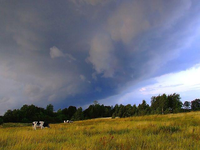 Zdjęcia: okolice Dąbrówna, Mazury, Nadciagająca burza, POLSKA