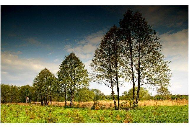 Zdj�cia: gdzie� w drodze, woj.Opolskie, drzewa, POLSKA