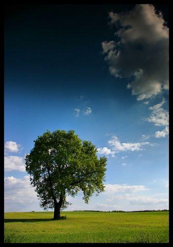 Zdjęcia: gdzieś w drodze, woj.Opolskie, drzewo :-), POLSKA