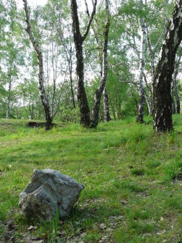 Zdjęcia: Katowice, Śląsk, Mała skałka w moich alpach, POLSKA