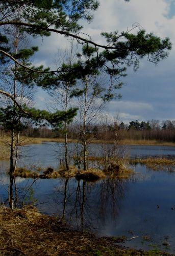 Zdjęcia: las , mazowsze, spacerkiem , POLSKA