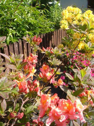 Zdjęcia: mazowsze, kolorki z ogródka, POLSKA