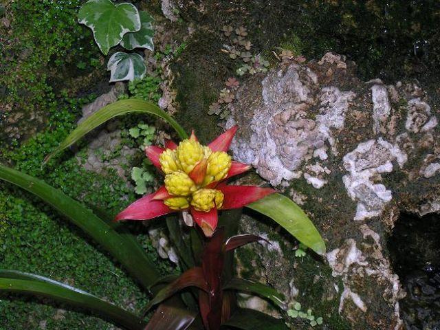 Zdjęcia: Lubiechów, Dolny Śląsk, Kwiat, POLSKA