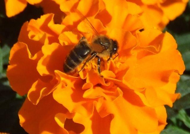 Zdjęcia: Krapkowice, W.Opolskie, owad, POLSKA