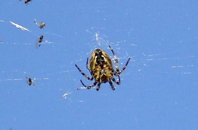 Zdjęcia: Krapkowice, W.Opolskie, pająk, POLSKA