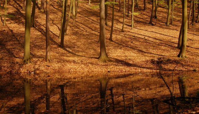 Zdjęcia: Łagów, Lubuskie, Był sobie las ..., POLSKA