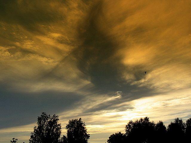 Zdjęcia: Niebo nad Mazowszem, Centralna Polska, Uciekaj ptaszku, POLSKA