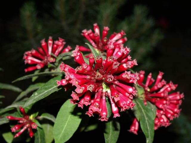 Zdjęcia: pod warszawą, mazowsze, kwiatek z bliska, POLSKA