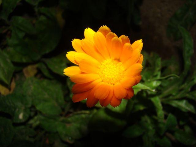 Zdjęcia: Śląsk, Śląsk, Kwiatek, POLSKA