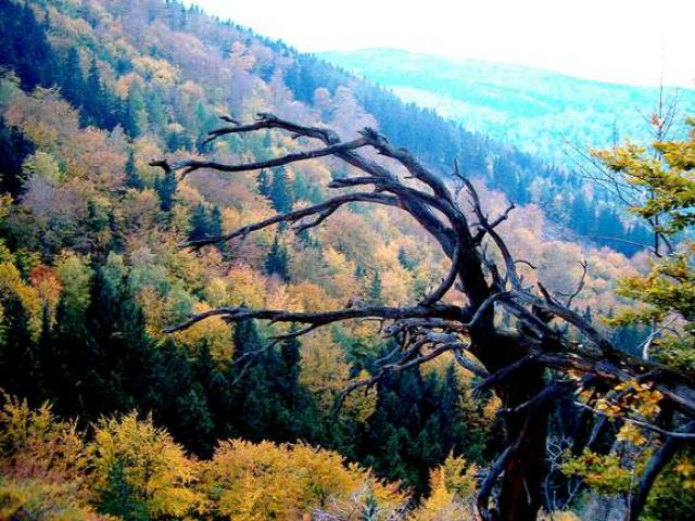 Zdjęcia: Chojnik, Dolny Śląsk, Karkonosze - widok z goóry Chojnik, POLSKA