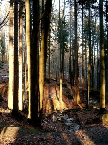 Zdjęcia: Karkonosze, Dolny Śląsk, W drodze na Chojnik, POLSKA