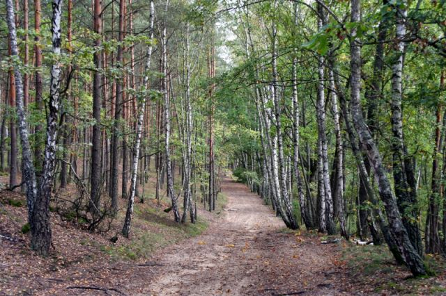 Zdjęcia: Sieraków-Truskaw, puszcza kampinoska, jesień, POLSKA