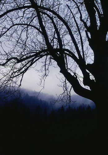 Zdjęcia: Nieistniejąca wioska Czertyżne, Beskid Niski, Cienie przeszłości, POLSKA