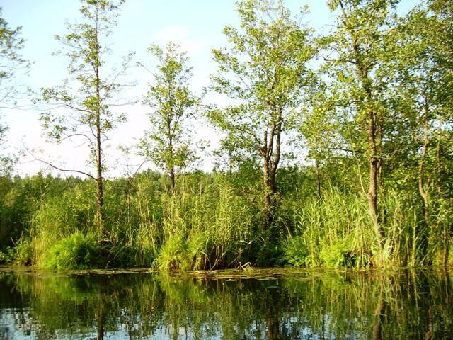 Zdjęcia: Jezioro Rospuda, Podlasie, Rospuda 1, POLSKA