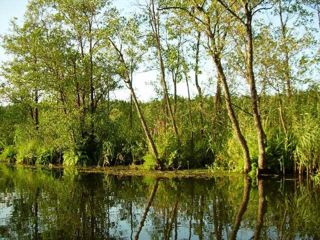 Zdjęcia: Jezioro Rospuda, Podlasie, Rospuda 2, POLSKA