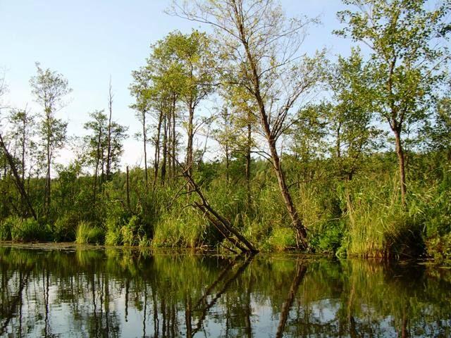 Zdjęcia: Jezioro Rospuda, Podlasie, Rospuda 3, POLSKA