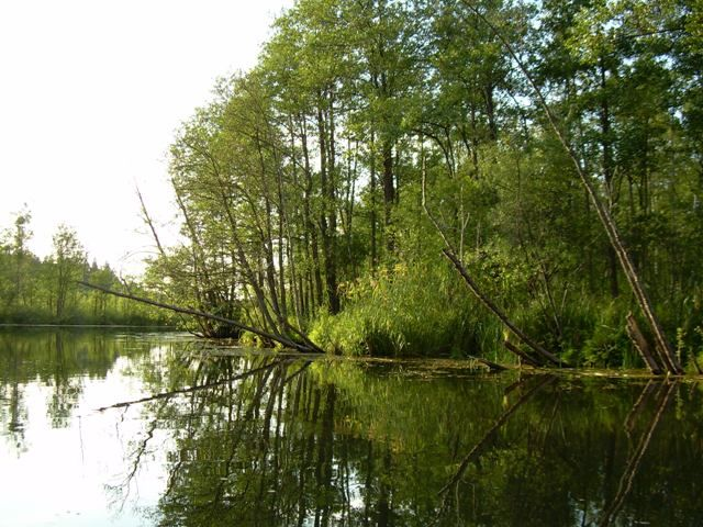 Zdjęcia: Jezioro Rospuda, Podlasie, Rospuda 4, POLSKA