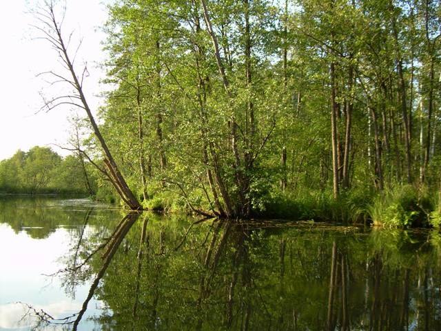 Zdjęcia: Jezioro Rospuda, Podlasie, Rospuda 5, POLSKA