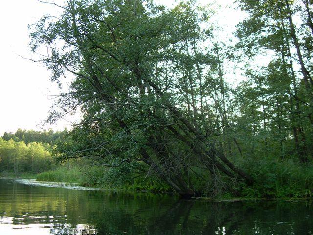 Zdjęcia: Jezioro Rospuda, Podlasie, Rospuda 6, POLSKA