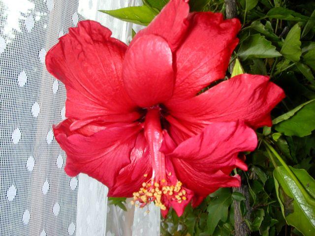 Zdjęcia: dom, brok, róża chińska, POLSKA