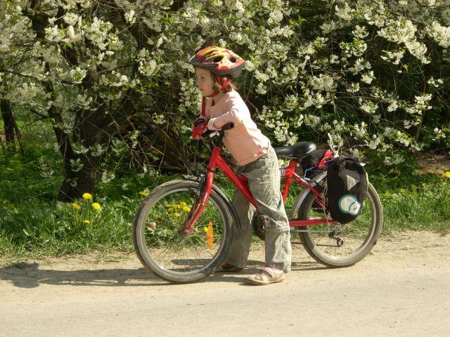 Zdjęcia: Roztocze., Kwiatowa Adula., POLSKA