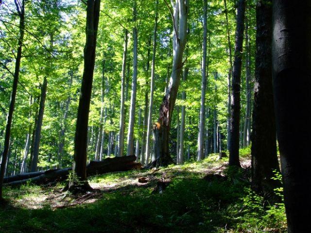 Zdjęcia: Biskupia Kopa, Góry Opawskie, LAS, POLSKA