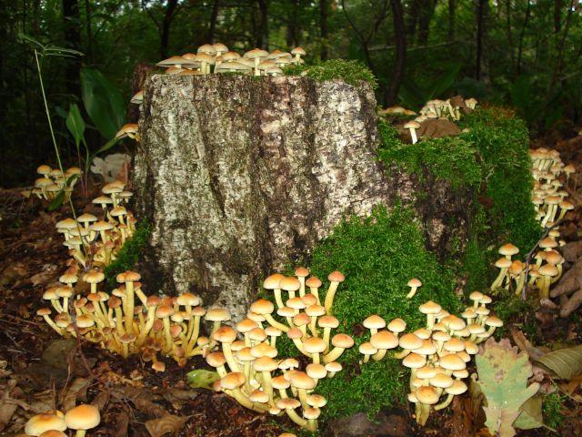 Zdj�cia: las, okolice warszawy, otoczenie, POLSKA
