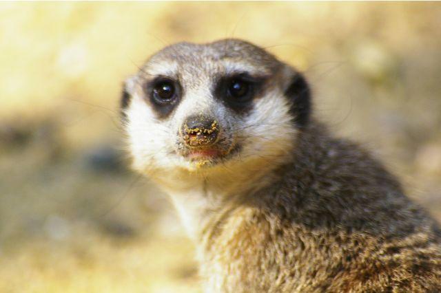 Zdjęcia: Zoo, Wrocław, Mam nosek w piasku, POLSKA