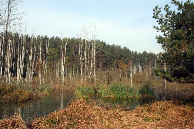Zdjęcia: Miodówko, Mazury, mokradła, POLSKA