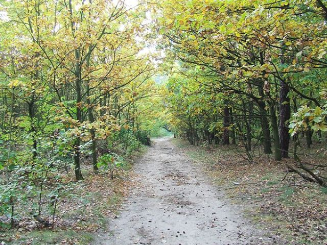 Zdj�cia: okolice Krapkowic, LAS, JESIE�, POLSKA