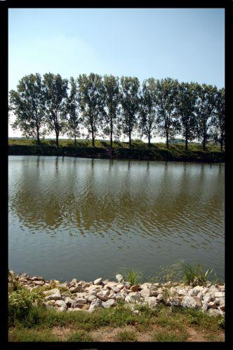 Zdjęcia: słubice, drzewka, POLSKA