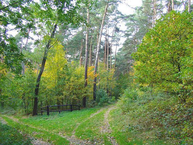 Zdjęcia: okolice Krapkowic, LAS, JESIEŃ, POLSKA