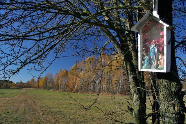 Zdjęcia: okolice Skórca k.Siedlec, Podlasie, Podlasie14, POLSKA